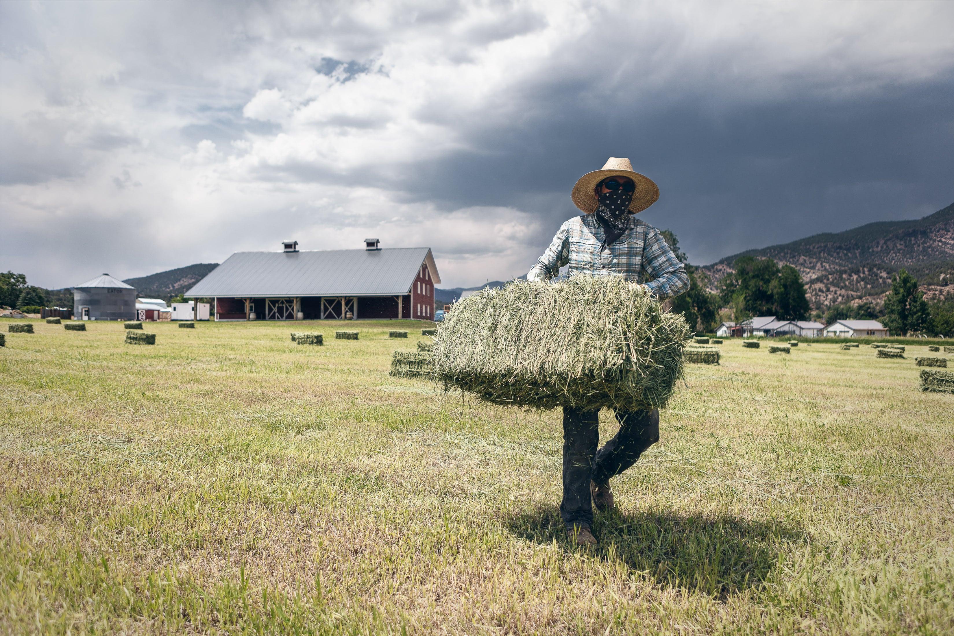 a man lifts a bail of hay on a hay farm in Howard, Colorado