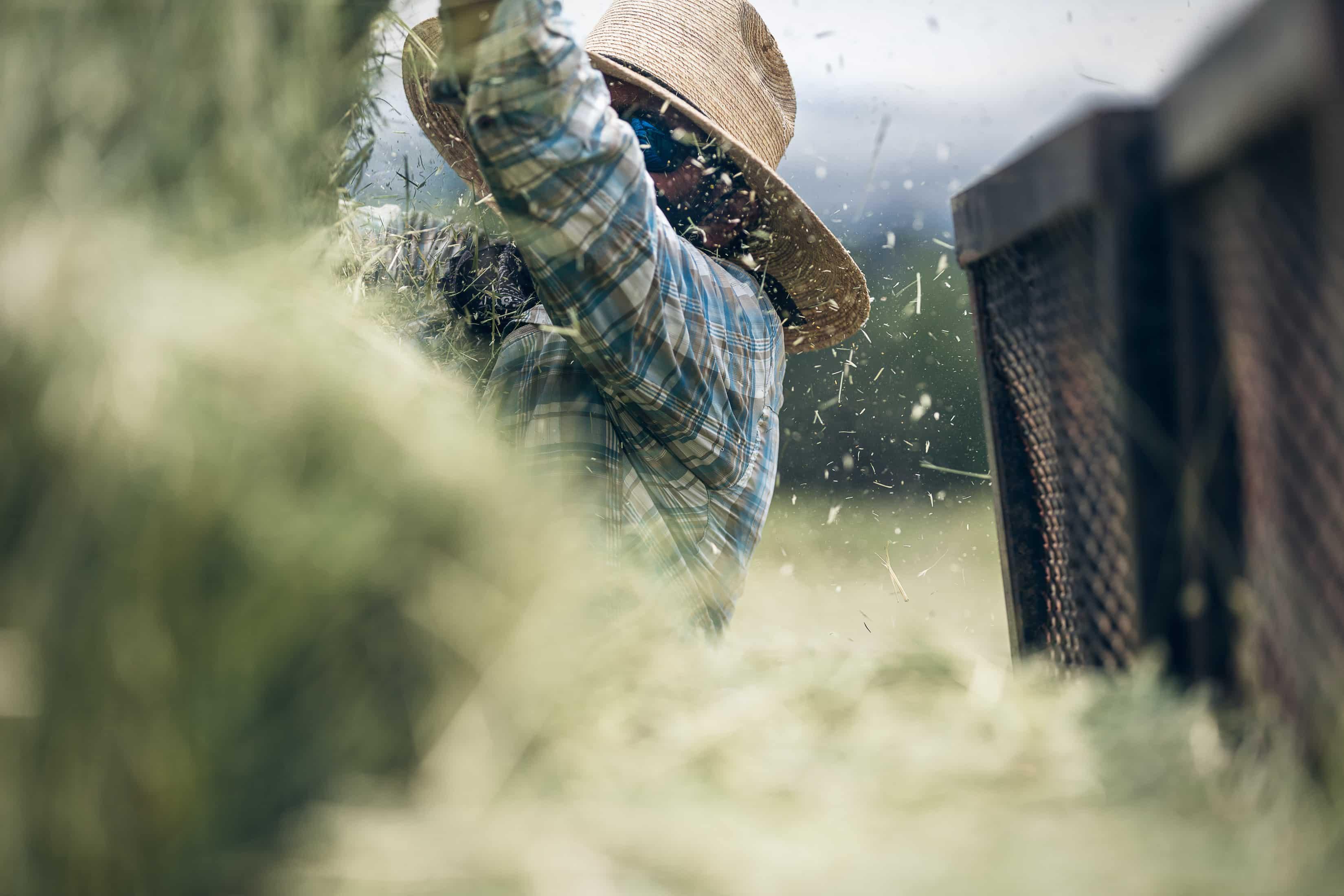 a man stacks hay on a hay farm in Howard, Colorado