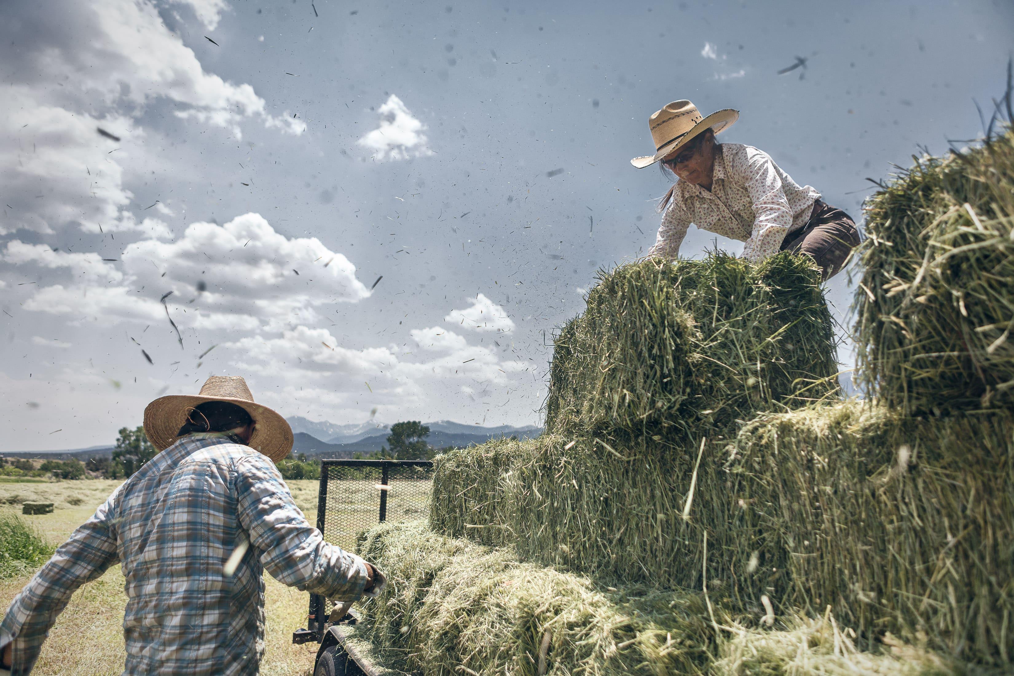 A Man And A Woman Stack Hay On A Hay Farm In Hay Farm In Howard, Colorado